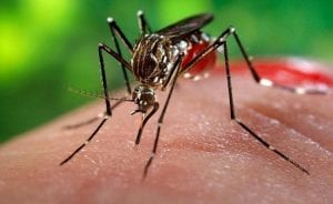 All You Need to Know About Chikungunya, its Symptoms and prevention