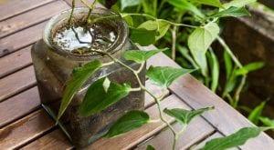 சேமிப்பு நீர் கொசு இனப்பெருக்கம் ஒரு தளம்