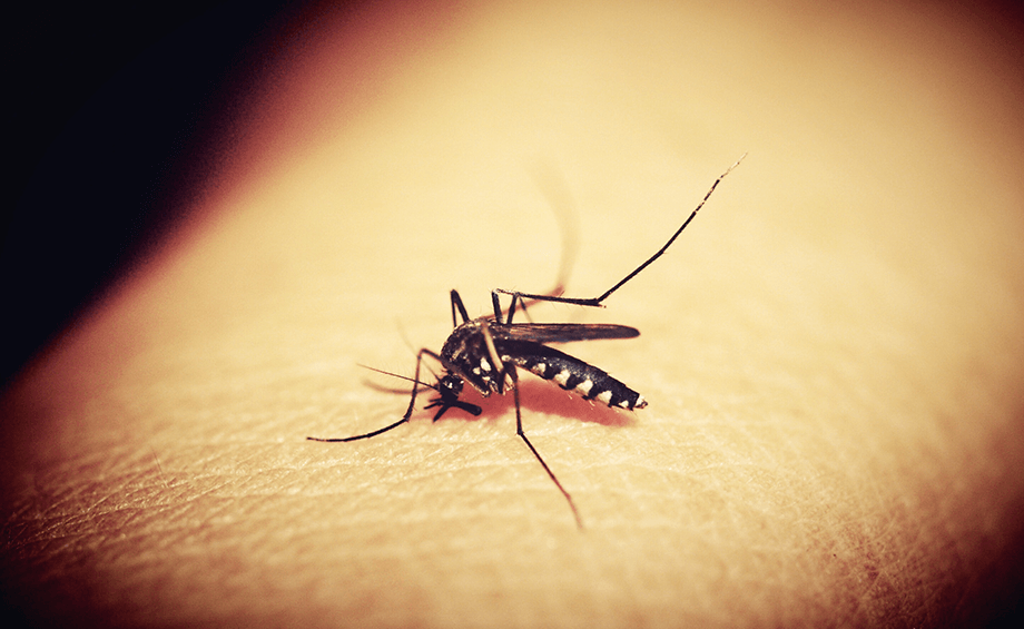 7 Tips to safeguard your child from Dengue and Chikungunya